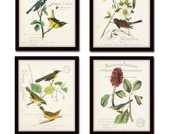 French Aviary Collage Print Set No. 3, Botanical Prints, Print Set, Wall Art, Giclee, Vintage Bird Prints, Audubon Bird Prints, Illustration