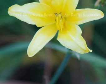 Floral Art, Floral Print, Flower Art, Flower Photography, Floral Decor ,Yellow Flowers, Yellow Decor, Yellow Art, Nature Photography