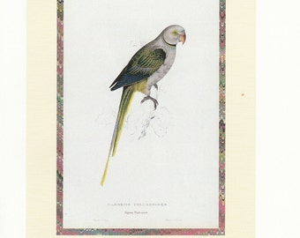 Parrot Print by Edward Lear. The Family of Parrots. Vintage Art Print. Bird Family Decorative Wall Hanging.