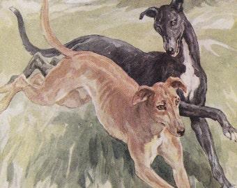 vintage dog illustration print greyhounds sighthound coursing game