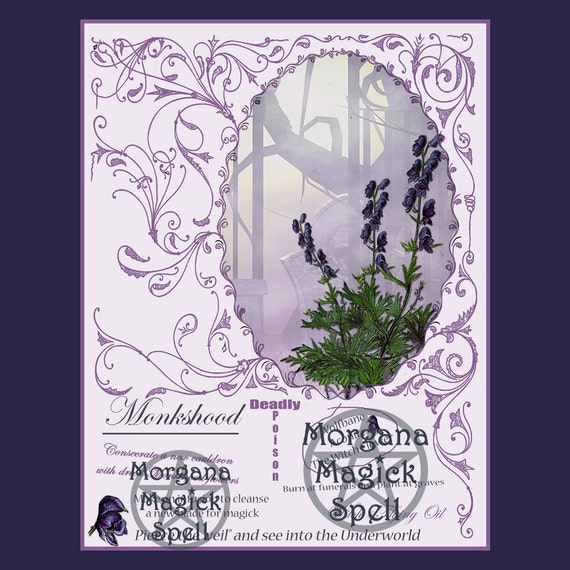 Monkshood the Witch's Herb