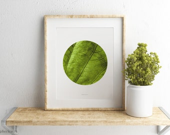 Green leaf photo, Tropical photography, Nature wall print Tropical decor Wall photo art, Botanical close-up, Nature photography Green decor
