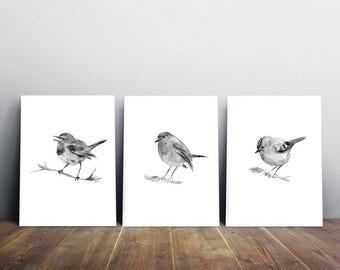 Tiny birds art - set of 3 prints -  black gray bird - robin - blue tit - gold crest - bird watercolor - bird painting - bird illustration