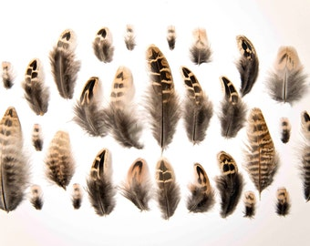 Natural Female Pheasant Feathers (Brown, Black, Cream, + White Striped) 2-11cm Great for Crafts, Dreamcatchers and Jewellery