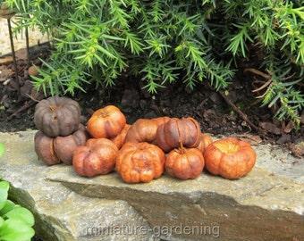 Putka Pumpkins, 25 Pieces for Miniature Garden, Fairy Garden