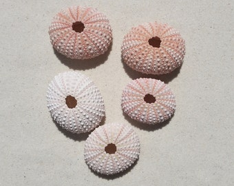 Airplant Holder PINK Sea Urchin | New!
