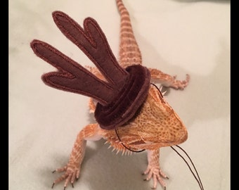 Bearded Dragon Christmas -  Elf Antlers and/or Elf Hats and/or Elf Capes Costume