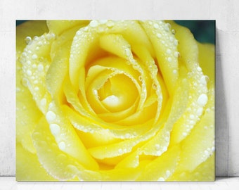 Rose Poster,Yellow Rose Print,Printable Canvas,download canvas,flower Print,Large Flower Photography Wall decor Home Decor,Digital Images