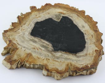 Petrified Wood | Fossil | Wood Fossils | Wood Decor | Natural Decor | Specimen Collection | Fossilized Wood | Rustic | Bohemian