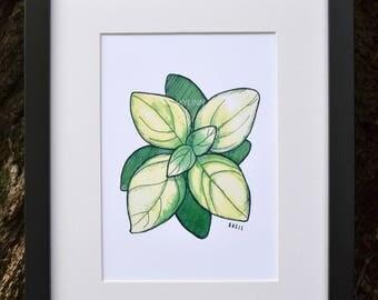 Basil Watercolor Print (Matted)