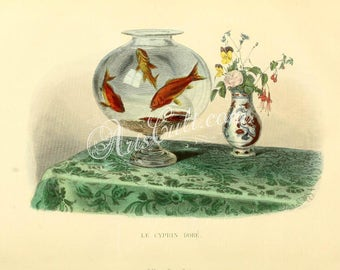 fishes-02651 - Goldfish in aquariums aquaria on table with vase flowers printable vintage picture digital download image book illustration