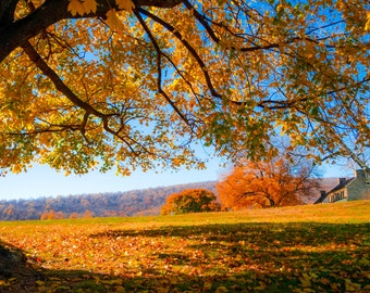 Fall photo print; Nature photography print; Outdoor wall art; Color photography; Nature scenery; Photo prints