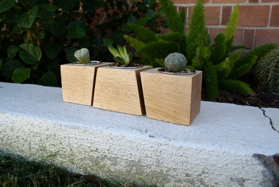 Modern Maple Wood Boxcar Succulent Planters