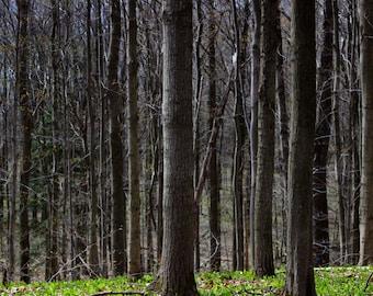 Woodland Landscape Print