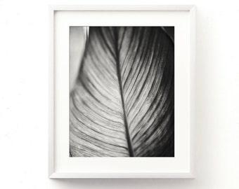 black and white photo printable, leaf print, nature photography, minimalist decor, abstract, loft decor, tropical wall art, bedroom art