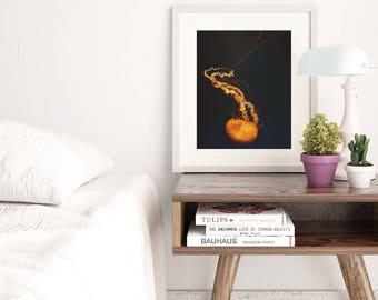 jellyfish photo, kids room wall art, jellyfish print, beach photography, sealife art, orange blue decor, instant download, beach printable