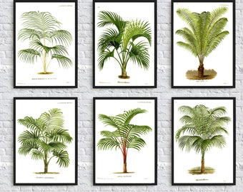HD wallpapers palm tree home decor Page 2