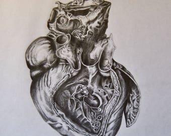 Heart (Anatomy)