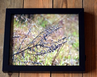FRAMED Floral Focus Photographic Print - 10x8