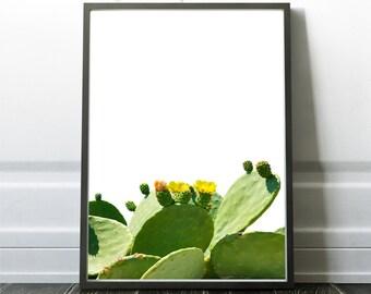 Cactus & Cacti Print, Desert Poster, Cactus Decor, Printable Cactus, Instant Printable Cacti, Arizona Style, Digital Download Cactus