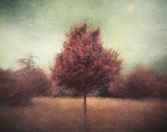 Tree Art, Painterly Art, Surreal Art, Wall Art, Tree Print, Photo Prints, Nature Art, Tree Lovers Art, Home Decor, Unique Art, Dreamy Art