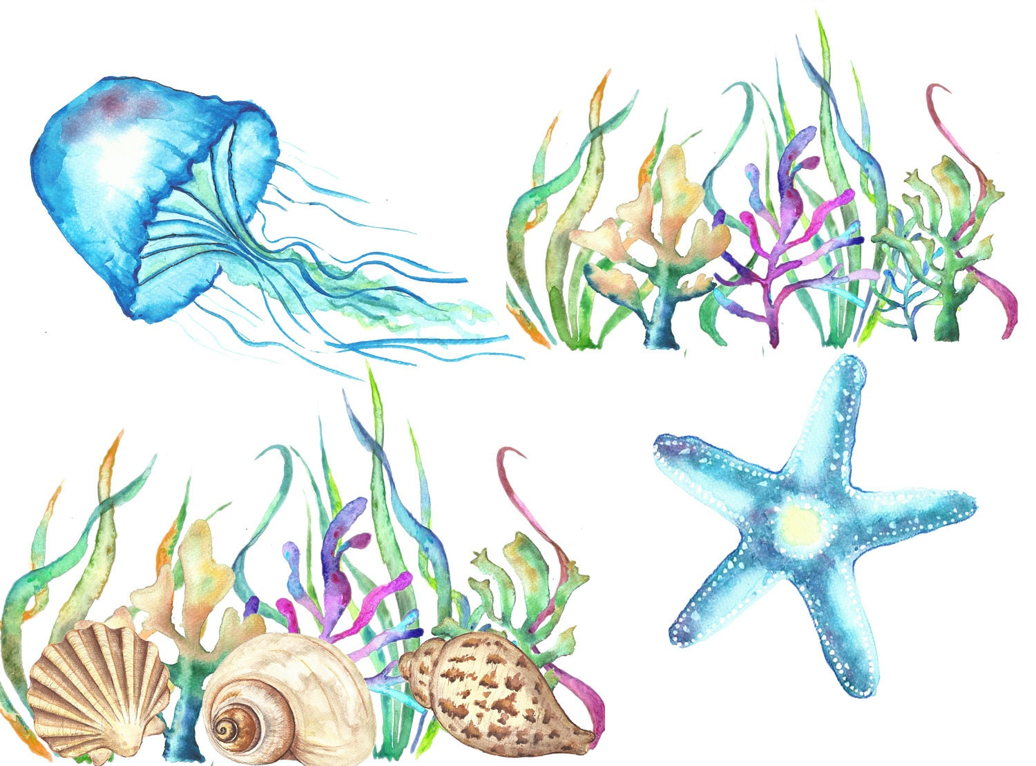 Sea Shells Watercolor Clipart Under The Sea Clip Art