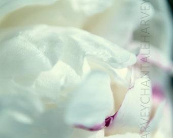 Flower photo print, White peony photo, wall art, 8x12, 10x15, 12x18, 14x21, 16x24, 18X27, photo abstract, fine art, design photo flower