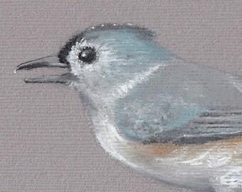 Original Bird Illustration | Tufted Titmouse | Bird Pastel Drawing | Backyard Bird Drawing | Songbird Art | Bird Lover Gift | Birding