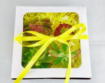 Succulent gift box, easter basket, easter gift, birthday gift, succulent box, mom gift for mom, teacher gift, coach gift, retirement, office