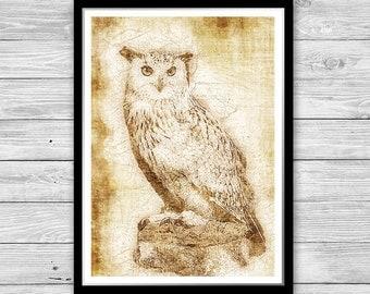 Owl, Owl print, Bird of prey poster, Archival art print with style of old geographic maps, Owl Decor, Owl Art print, Animal wall art, Bird
