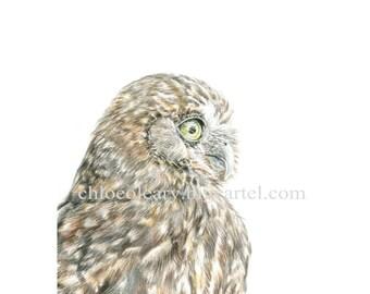 Ruru Owl - Fine Art Print