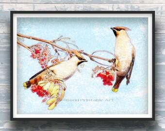 DISCOUNTS, WATERCOLOR DIGITAL, Cedar waxwings, Waxwings, Waxwings Alberta, Cedar waxwing art, Gift idea, Picture of a bird, Bird lover gift
