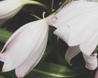 3x Flowers | Botanical Garden | Printable Art