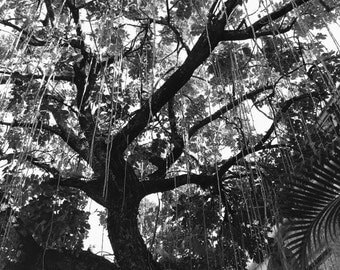 Key west Photography, Meet Me Under the Tree