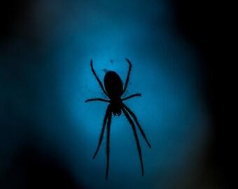 Spider Moonlight