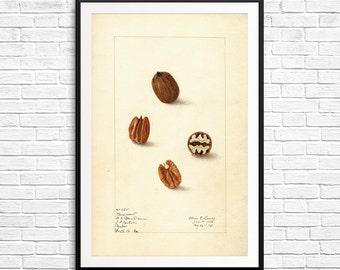 Kitchen prints, pecan, pecans, pecan nuts, pecan pie, kitchen art, kitchen decor, kitchen gifts, kitchen wall art, kitchen print set, poster