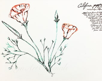 California Wall Art Poppy / Handmade / Original / Nature / Botanical illustration / fine art