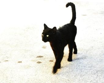 El Gato!