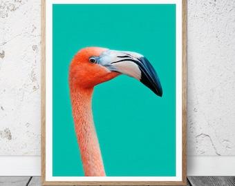 Flamingo Wall Art Print - Bird photo, Tropical theme, Digital download, Modern Printable Art, Nursery Print, Home decor,
