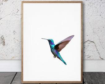 Humming Bird Print - Printable Art, Digital Download, Humming Bird Wall Art, Exotic Bird Photo, Tropical Art Print, Room Decor, Blue Bird