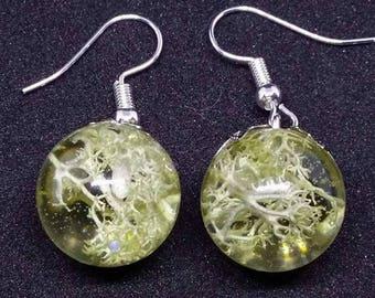 earrings lichen  ice resin
