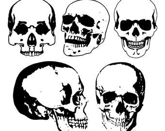 5 vector Skulls, Anatomy clip art, Skull clip art, Skull SVG, silhouette, Svg, Dxf, Eps, Ai, Cdr, Studio3 files. Design element, clipart