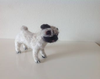 Pug dog with cute attitude!