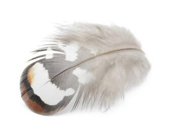 Reeves Venery Pheasant Brown Plumage Feathers (Bulk)