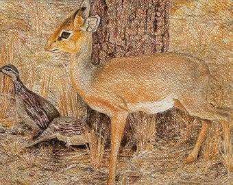 African Wildlife Art, Wildlife Original Art, Wildlife Art, Dikdik Painting, Antelope Art, Antelope Artwork, Animal Art, Wildlife Painting