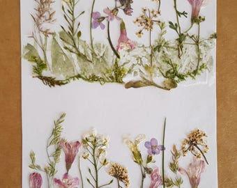 Garden. Art Collage. Greeting Card