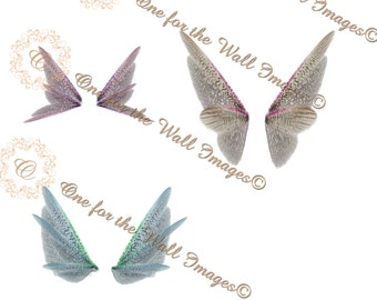 Wing png, fairy, stock composite