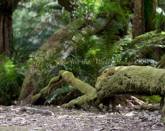Digital Backdrop, Rainforest, ferns, mossy Log