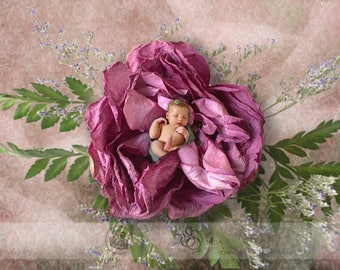 Newborn Lavendar Rose Digital Background