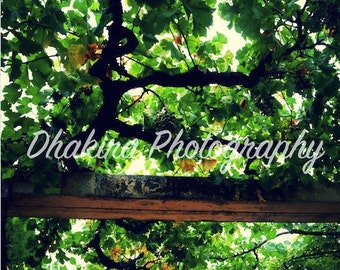 Vines inside in the Alhambra - Photography